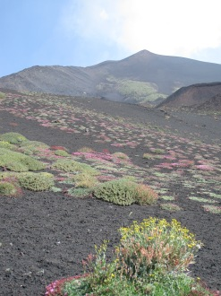 Summer on Etna - Alpine flowers 2012