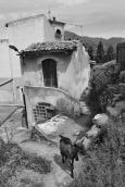 Goat - Francavilla