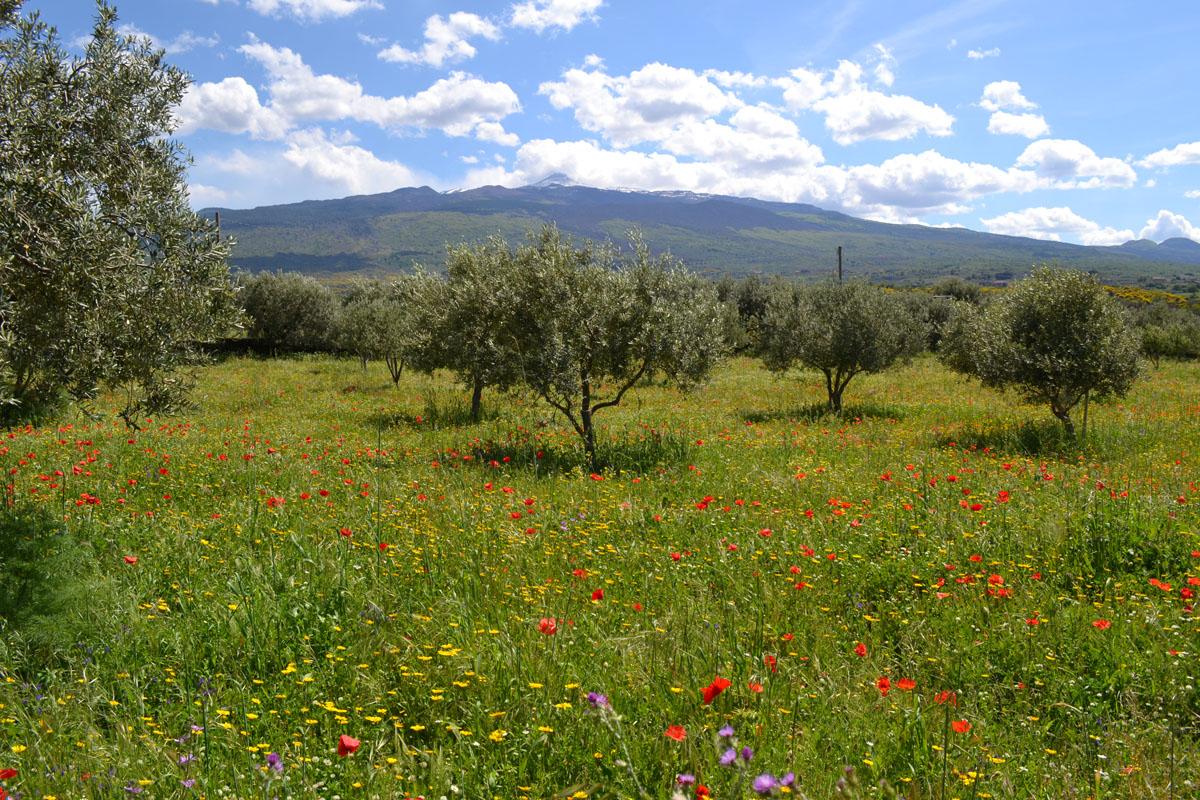 Primavera nr Randazzo
