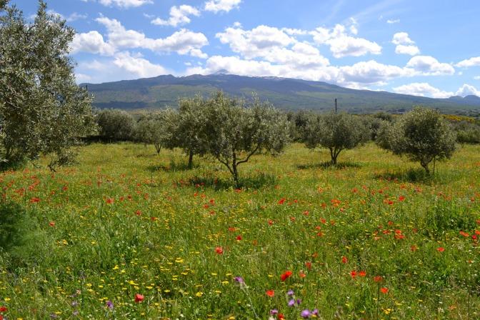 Primavera in Fiore – Spring in Flower