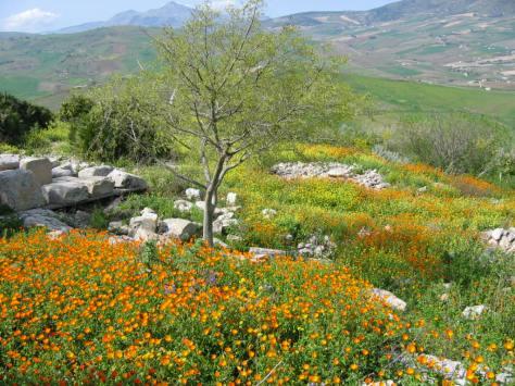 Ruins & Wildflowers