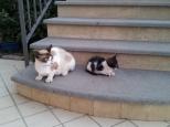Azzura & kitten