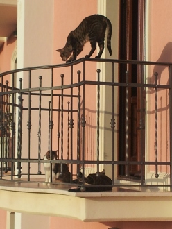 cats on thhe balcony