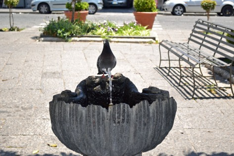 Pigeon & the water fountain