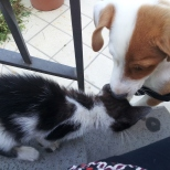 Puppy meets kitten