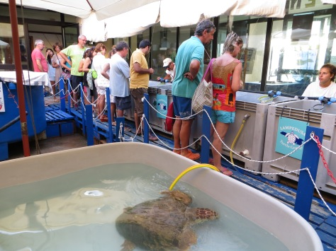 The turtle hospital at Lampedusa