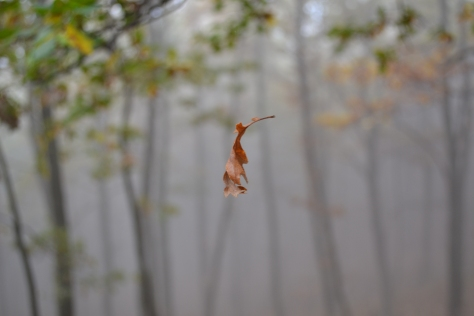 Fallingleaf